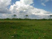 Brasilien 1 400 Ha Grundstück