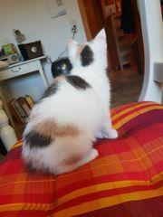 Mietzi sucht neues Zuhause