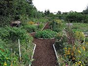 Gärtner sucht Garten Gütle Stückle