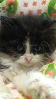 wunderschöne Katze 8