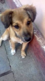 Notfall: Hundemädchen Moni