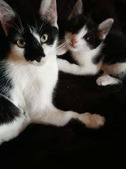 Babys Katzen in Sigmaringen