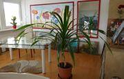 Verkaufe große Grünpflanze