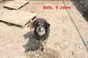 Familienhündin Bella ca 8-9 Jahre