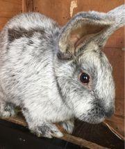 Kaninchen in liebevolle