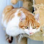 Ruhige Katze Helen sitzt auf