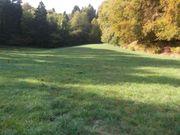 Waldwiese und Pferdeboxen zu vermieten