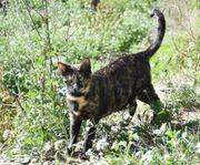 LENA - Wunderbares Katzenmädchen sucht ihre