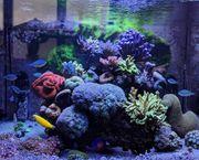 Meerwasserbecken Meerwasseraquarium aquarium meerwasser