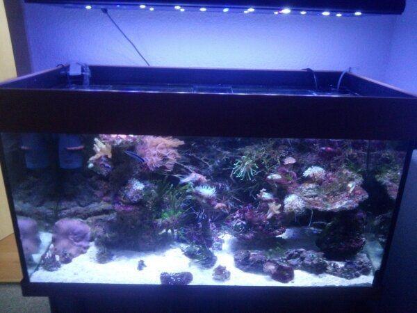 Meerweraquarium Led Beleuchtung   Meerwasser Led Beleuchtung Gebraucht Meerwasser Led Beleuchtung Fur