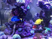 Top Meerwasser Aquarium als Raumteiler