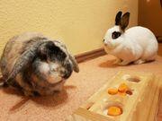 Kaninchen-Paar zu verschenken