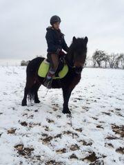Dartmoor Pony Kinderpony Tragend