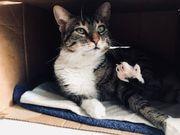 Zwei Hauskatzen suchen liebevolles Zuhause