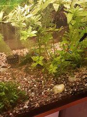 350l woha aquarium