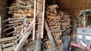 Brennholz Buche und Fichte