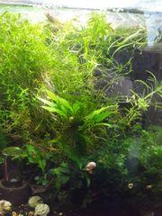 Wasserpflanzen-Rückschnitt zu verschenken