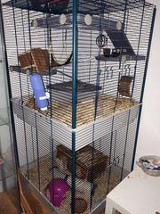 Ratte mit Käfig