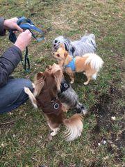 Hunde Spielgruppe - Betreuung -