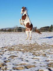 Liebens gutes Pony