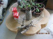 Tisch Baumscheibe Esche 150 Jahre