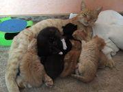 Katzenkinder ab Ende