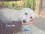 Lennox Leo Luke - 6 Mon