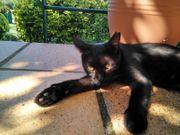 Katze Kimba sucht ein Zuhause