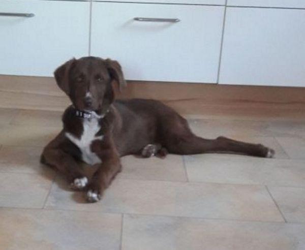 Kleine Schokomaus sucht » Hunde