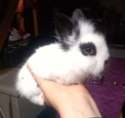 Kaninchen Kinder