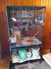 Nymphensittiche Käfig