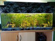 Verkaufe 120x50x40 aquarium