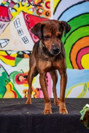 AMAR - Junger hübscher Hundebub ist