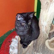 Kätzchen Luna sucht sehnsüchtig ihre