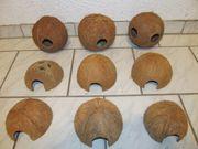 Verkaufe neue Kokosnussschalen
