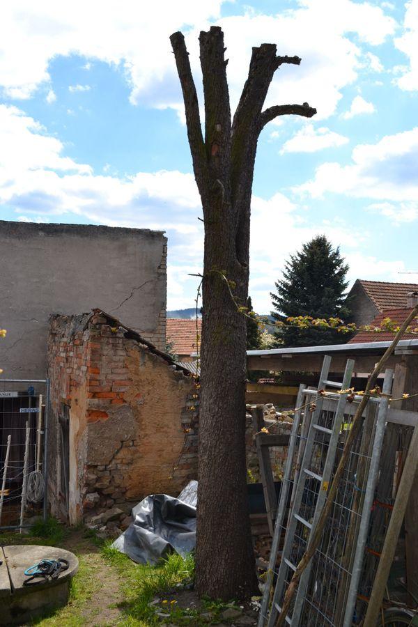 Holz Birne günstig gebraucht kaufen - Holz Birne verkaufen - dhd24.com