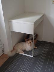 Schreibtisch Micke