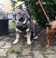Hundebub SMOKIE sucht ein Kuschelplätzchen