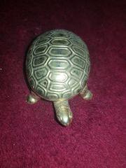 Schildkröte Dose