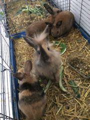 Kaninchen babies
