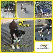 Schmusebacke Tom sucht liebevolles Zuhause