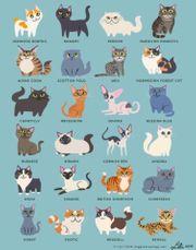 Kleintiere- und Katzenbetreuung Katzensitter