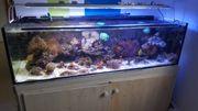 Meerwasser Aquarium 140x50x40