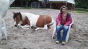 Selbsterforschung mit den Pferden - Einzelsitzungen