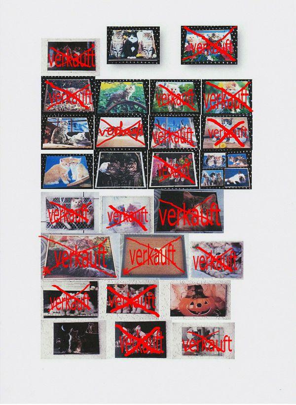 11 x Katzenbilder + Bilderrahmen Katzenbild Katzen Katze Rahmen Bild ...