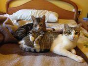 Katzenpärchen: Toshiba & Coquita