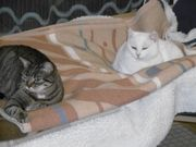 Unsere zwei Katzendamen suchen ein