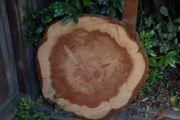 Mammutbaum Baumscheiben
