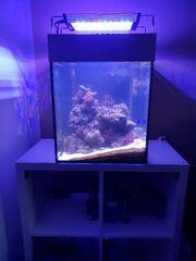 meerwasseraquarium 80 Liter Würfel