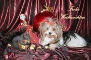 Weihnachtskarten für Tiere in Not